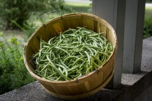 Kako uzgajati boraniju