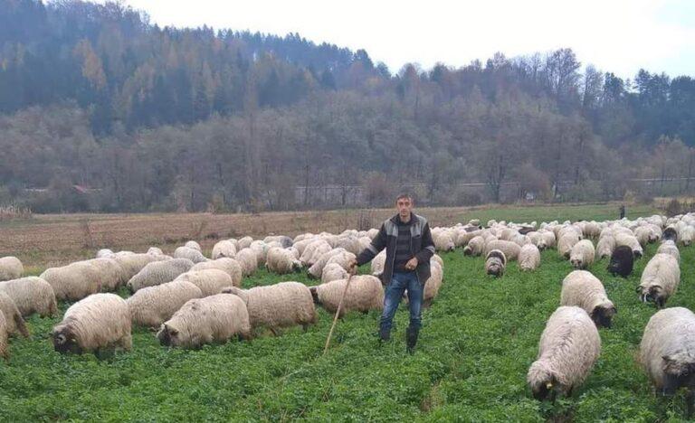 Mujetekic Alija uzgov ovaca Zepce